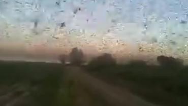 Langostas arrasaron cultivos en Santiago del Estero
