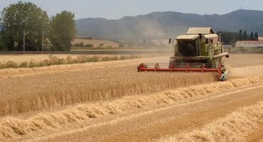 Conversión de cereales y oleaginosas, muy afectada por la devaluación