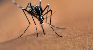 China: en el mismo día, aparecen un caso de dengue y uno de peste bubónica