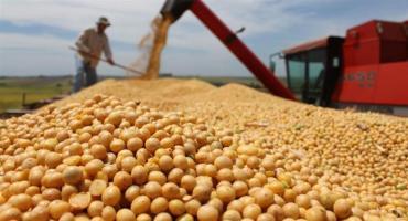 El precio de la soja, imparable: superó los 500 dólares por tonelada en Chicago