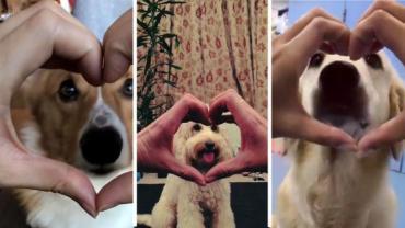 #SnootChallenge, el tierno viral en el que los perros son protagonistas