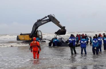 Encalló una ballena en una playa de Mar del Tuyú