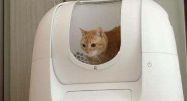 """Inventaron el """"inodoro inteligente"""" para gatos que revoluciona las redes"""