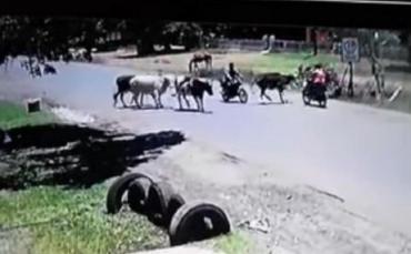 YouTube viral: patada de una vaca a una motociclista es furor en redes