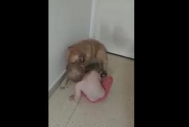 Angelina y Lola: el amor entre un bebé y su perro que conmueve en video viral