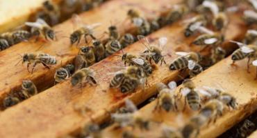 Investigadores descubren el primer nido de abejas de plástico
