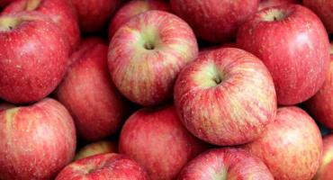 Lo que no sabías de las manzanas y te hará pensar antes de comer este alimento