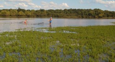 Detectaron restos de 16 fármacos diferentes en los peces del río Uruguay