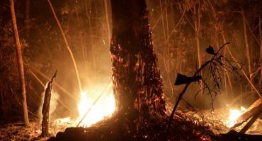 Amazonia, el peligro crece: nuevos focos de incendio y más protestas contra Bolsonaro