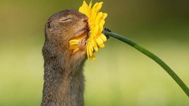 ¿Cuál es la historia de la foto de la ardilla que está oliendo una flor?
