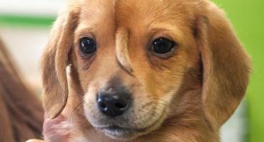 Asombro mundial por el perro que tiene dos colas