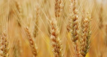 Caen los precios y el mercado de granos ya se prepara para la suba de retenciones