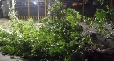 Navidad trágica en Mendoza: dos motociclistas mueren aplastados por árboles