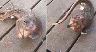 Descubren una extraña criatura marina y el video se volvió viral en redes