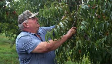 Uso de pesticidas: condenan a Bayer y BASF a pagar U$S265 millones a agricultor en EE.UU.