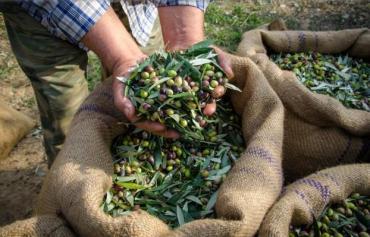 En Chilecito convocaron a 3000 cosecheros y solo se presentaron 3