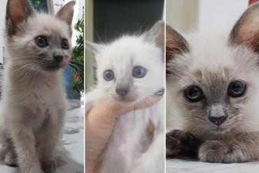 Día Internacional del Gato: ¿Por qué se celebra hoy?