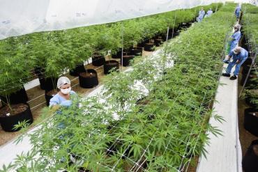 El coronavirus hizo aumentar el consumo de cannabis en Alemania