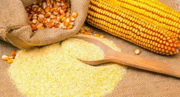 La Anmat prohibió una harina de maíz por encontrar ratas en el lugar donde se elabora