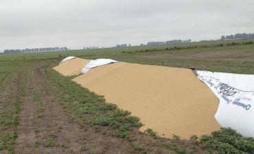 Por la rotura de silobolsas, entidades agropecuarias denuncian que ya se dañaron 5.700 toneladas