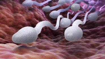 Fin del mito: los espermatozoides humanos no nadan moviendo la cola