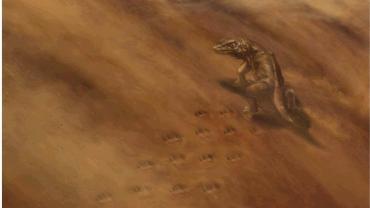 Descubren huellas de animales de hace 313 millones de años, tras el colapso de un acantilado del Gran Cañón