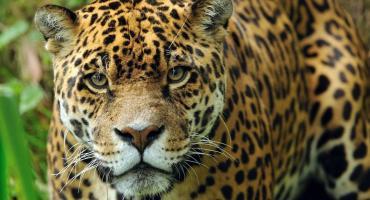 Ministerio de Ambiente intimó a Mercado Libre por venta de productos de fauna silvestre protegida