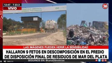 Conmoción en Mar del Plata: encuentran nueve fetos en descomposición en predio del CEAMSE