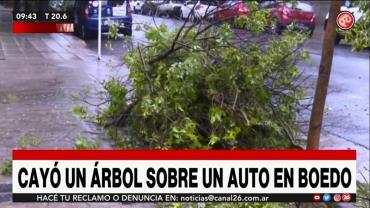 Temporal en Boedo: cayó un árbol sobre su auto que había comprado hace tres días