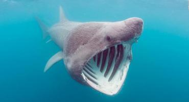 Aparece un extraño  tiburón  bebé con