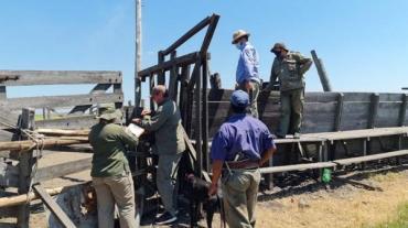 Importante productor del norte de Santa Fe denunció el robo de 2.000 animales