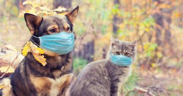 Coronavirus: detectaron cuadros graves en perros y gatos con la variante británica
