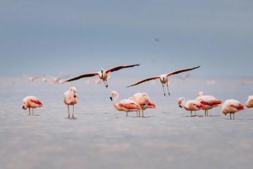 Ansenuza: ¿Cómo es el nuevo Parque Nacional que tiene Argentina?
