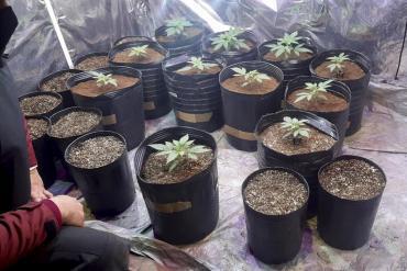 Desbarataron una fiesta clandestina en barrio de Colegiales: había 14 personas y tenían plantas de marihuana