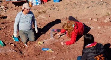 Descubren restos fósiles de un dinosaurio hervíboro de entre 96 y 99 millones de años en Neuquén